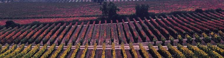 Campo de flores coloridas